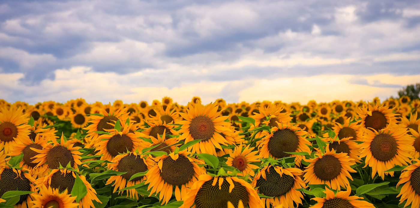 Home Slideshow Header 10