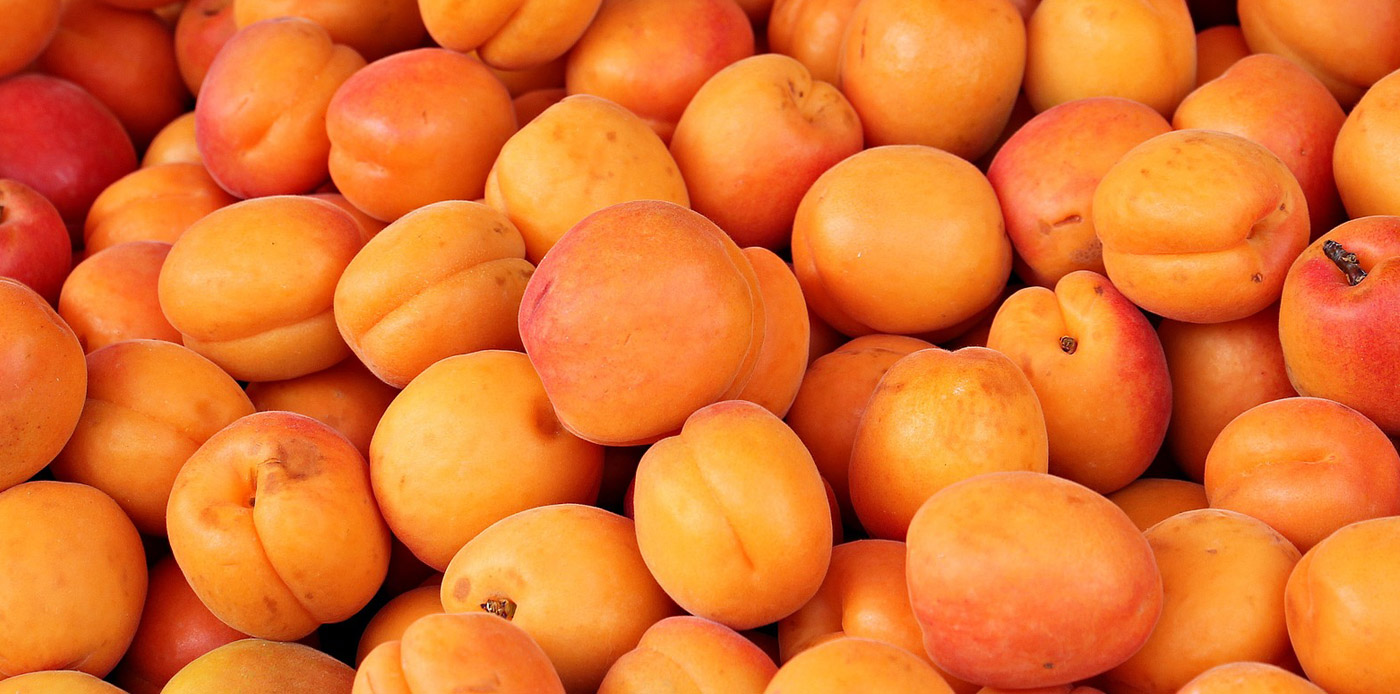 Home Slideshow Header 4