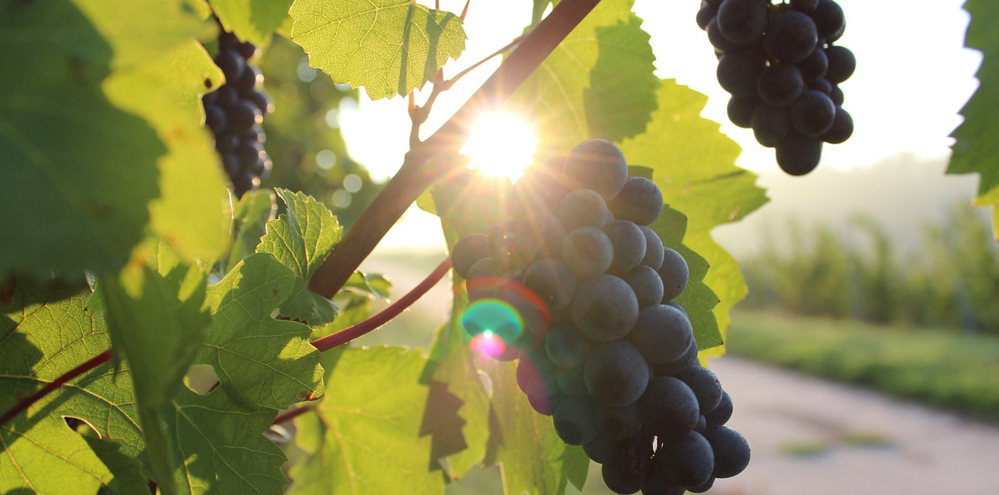 Home Slideshow Header 6